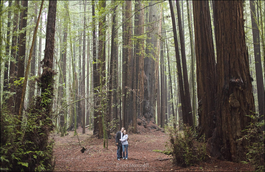 brett and kelli in the california redwoods